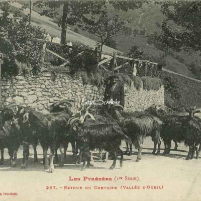1 - 287 - Retour du Chevrier (Vallée d'Oueil)
