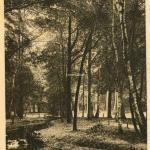 19 - Un Coin du Bois de Boulogne