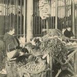 22 - Les grands marchés - Spécialités pour petits oiseaux