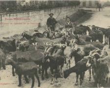 26 - Troupeau de Chèvres et le Chevrier