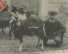 27 - Le Chevrier et son Troupeau