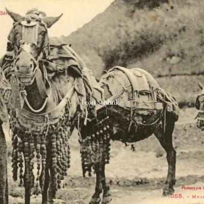 3 - 1055 - Mulets de Transports