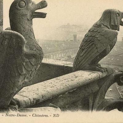 350 - Notre-Dame - Chimères
