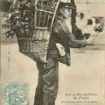 43 - Artichauts verts et tendres...