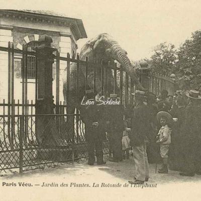 53 - Jardin des Plantes. La Rotonde de l'Eléphant