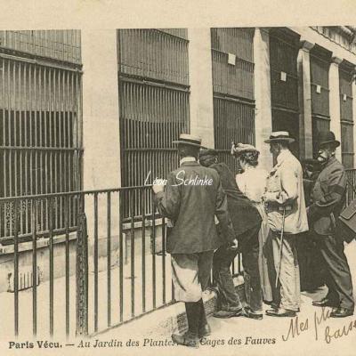 54 - Au Jardin des Plantes. Les Cages des Fauves