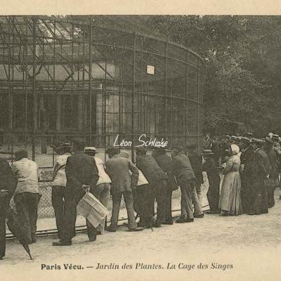 56 - Jardin des Plantes. La Cage aux Singes