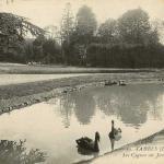 59 - Les Cygnes au Jardin Massey