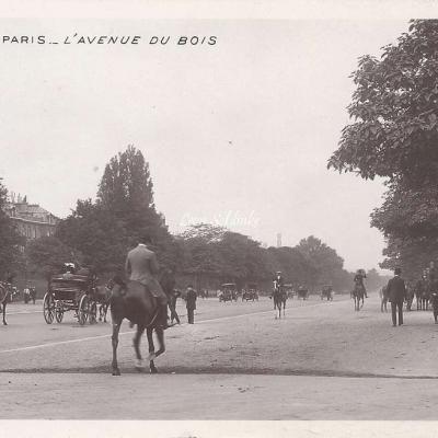 84 - L'Avenue du Bois
