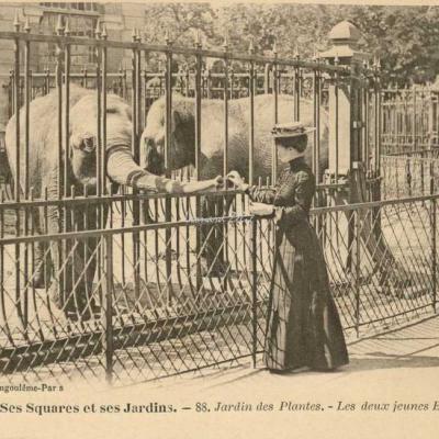 88 - Jardin des Plantes - Deux jeunes éléphants