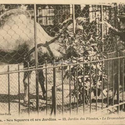 89 - Jardin des Plantes - Le Dromadaire
