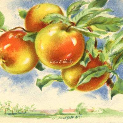 1446 - Les Fruits de France