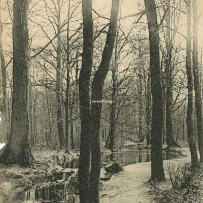 FF 408 - ENVIRONS DE PARIS - Bois de Boulogne - Vers la Cascade