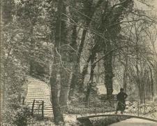 Un coin du Jardin des Plantes pendant la neige
