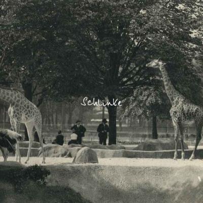 Zoo de Vincennes 119 - Les Girafes sur leur plateau